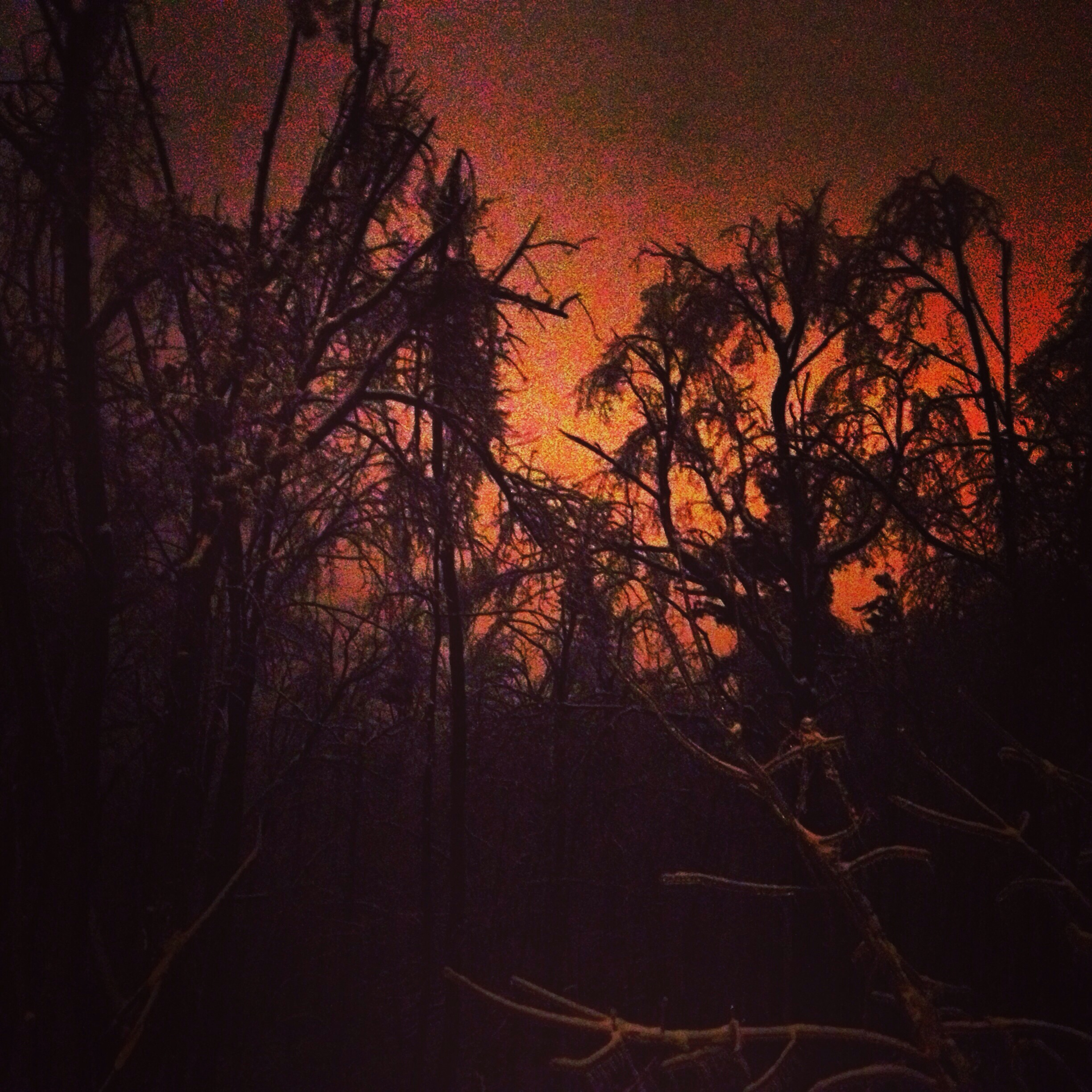 Ice-covered trees in dark orange glow